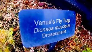 Ultra Erotica Fatal Embrace of the Venus Flytrap